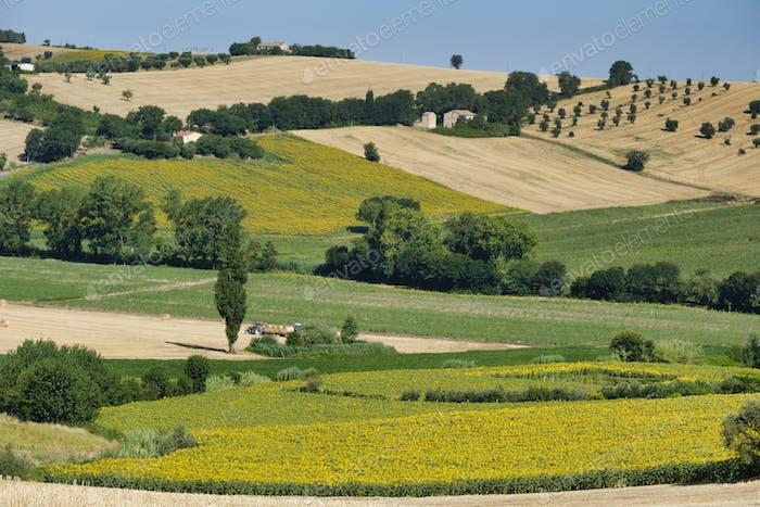 Horizontal rural cerca de Recanati (Italia)