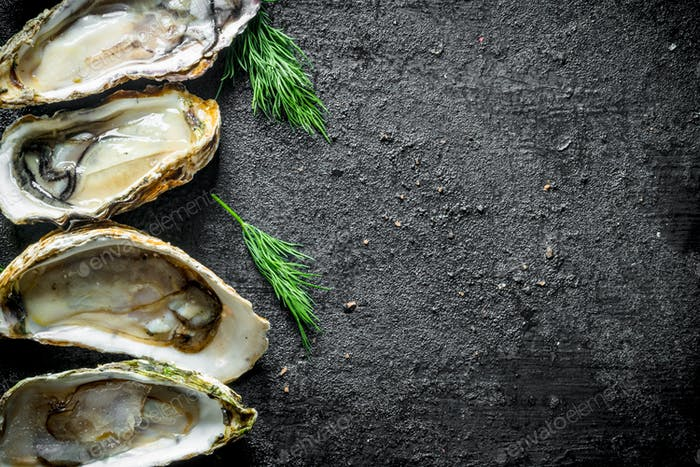 Appetizing raw oysters with dill.
