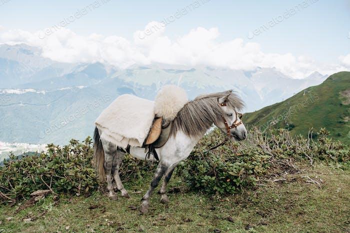 Ein Pferd erwartet Meister in den Bergen