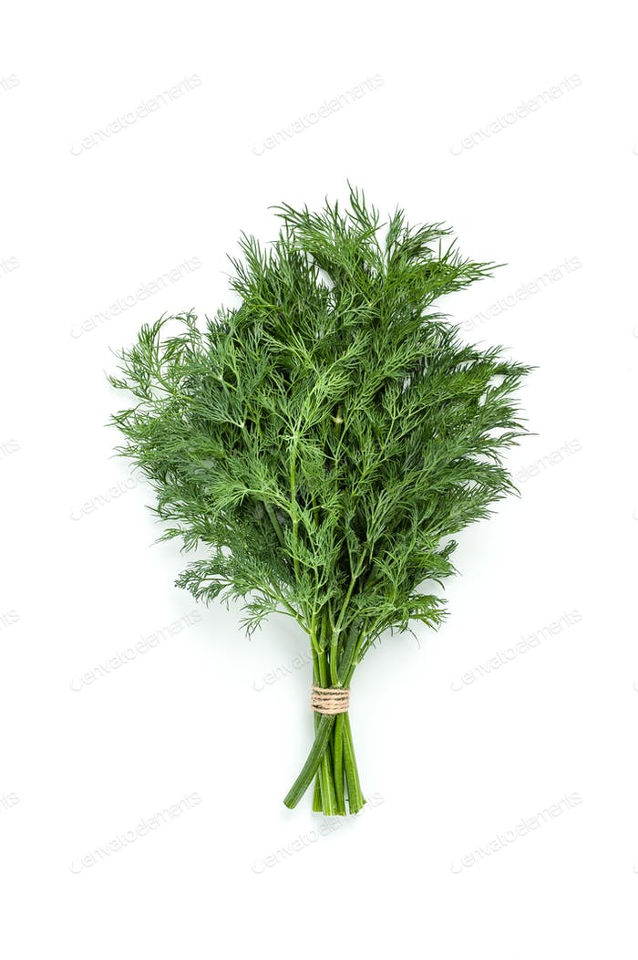 Bunches of fresh dill on a white background isolated.