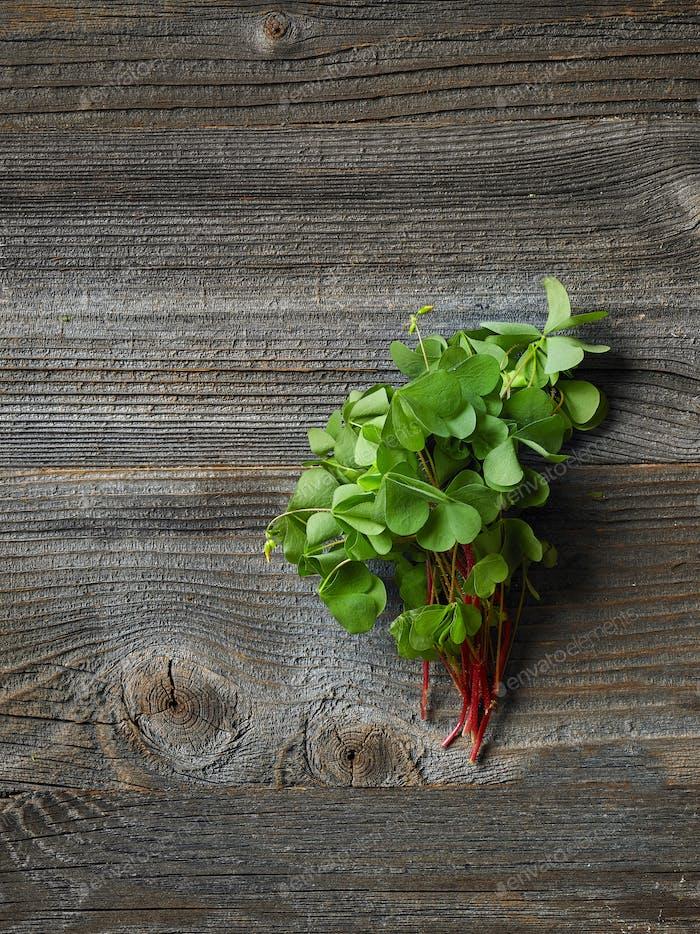 frische rohe Holz Sauerampfer Pflanze