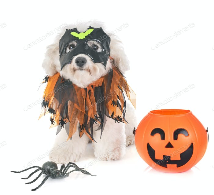 maltese dog and halloween