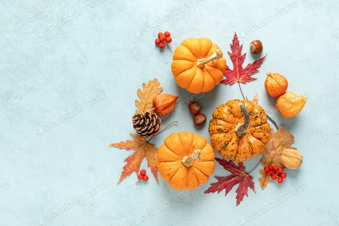 Autumn pumpkins with fall leaves, berries on blue background. Thanksgiving day or halloween holiday
