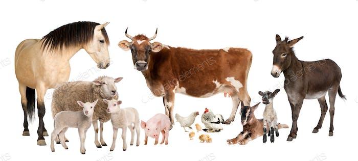 Gruppe von Nutztieren: Kuh, Schaf, Pferd, Esel, Huhn, Lamm, Schaf, Ziege, Schwein