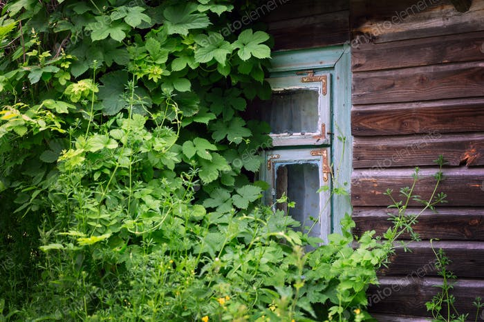 Old wooden window covered with plants