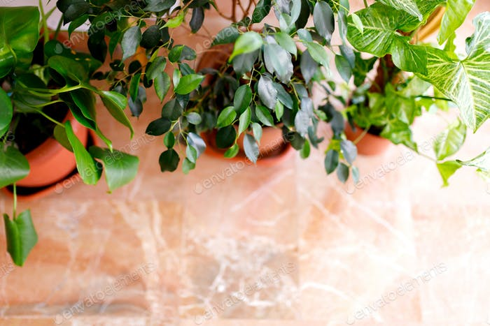 Best indoor plants to purify the air in the bedroom