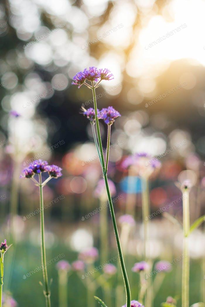 Lila Blumen im Wald