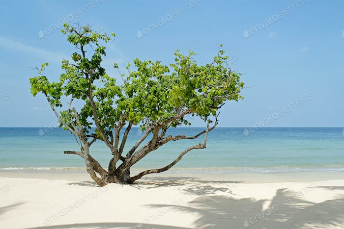 Tree on the beach, Thailand