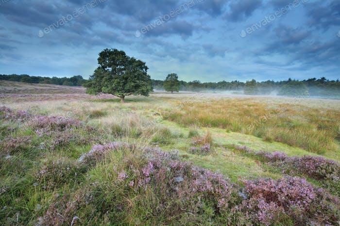 calm misty morning on marsh with heather