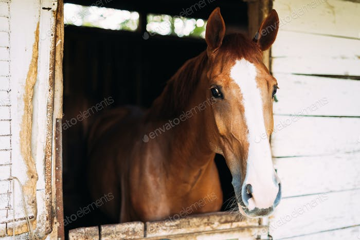 Picture of beautiful horse looking through window