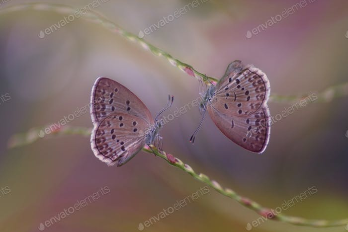 Purple Butterflies Sitting on a Stem