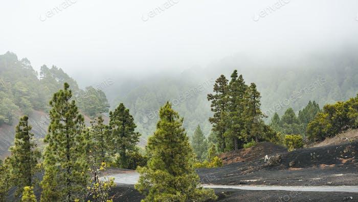 La Palma Forest And Rain, Spain
