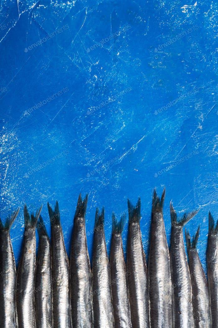 Anchoas. Vista superior, patrón de peces, orientación vertical clásica. Tonificado en azul moderno.
