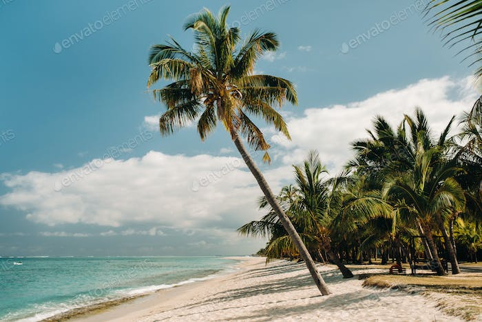 Beautiful beach, palm trees, and clouds on the horizon. Africa, Mauritius, South, near Le Morne