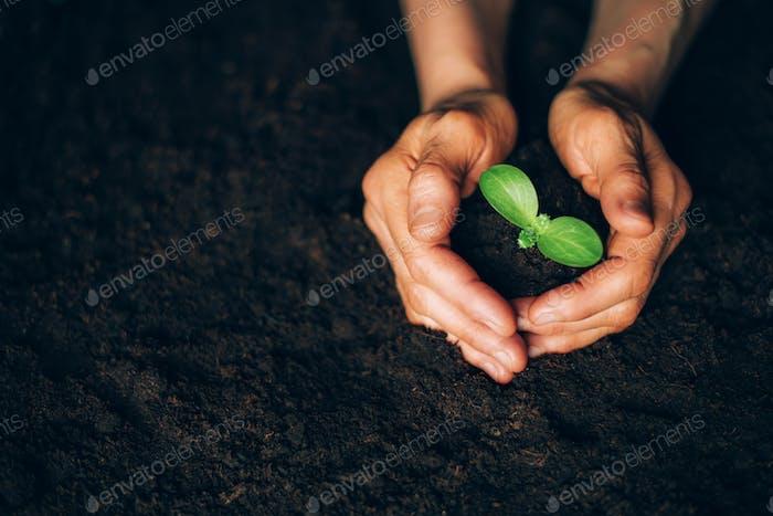 Landwirt Hand hält Jungpflanze. Ansicht von oben. Banner. Neues Leben, ökologisch, nachhaltiges Leben, kein Abfall
