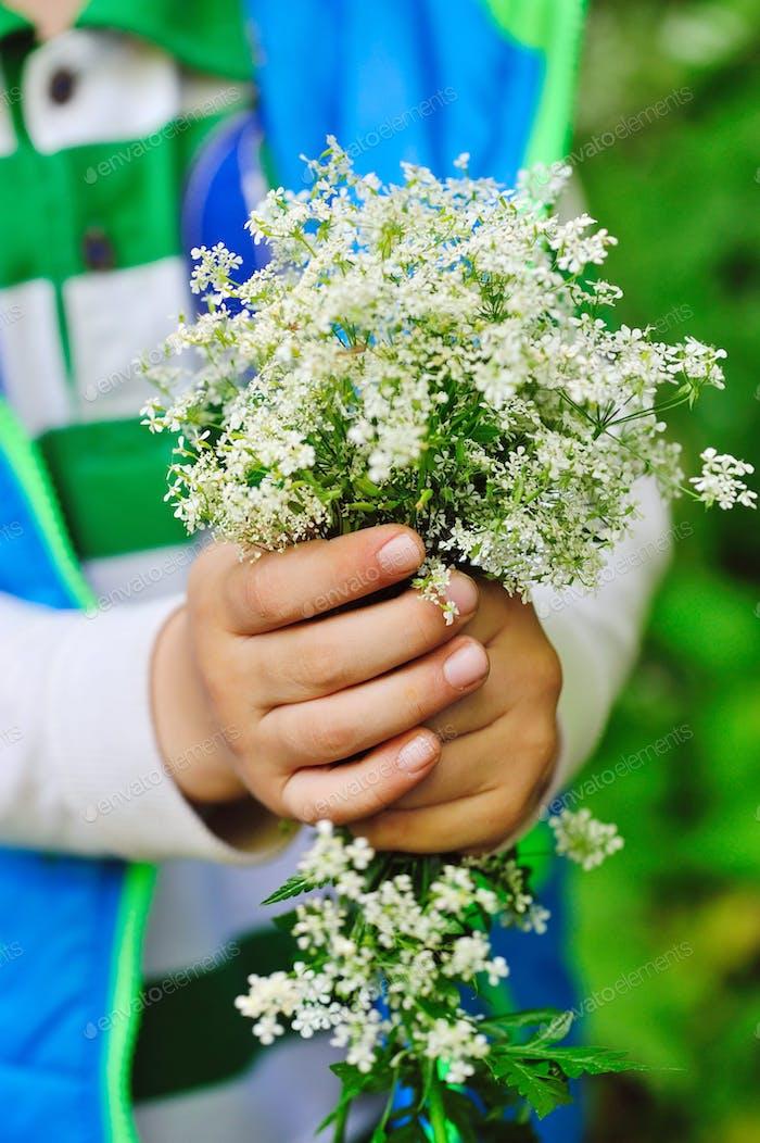 Blumenstrauß von wilden weißen Blumen in den Händen eines Kindes