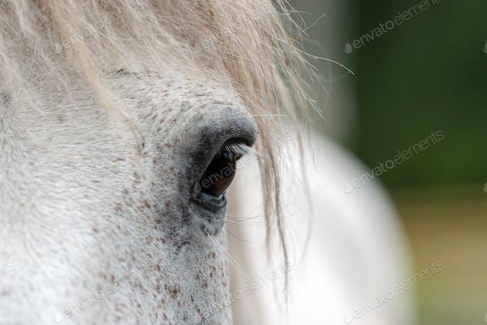 White horse eye