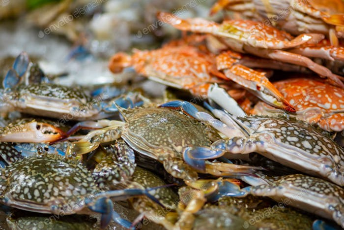Horse Crab Background Thai Street Food display