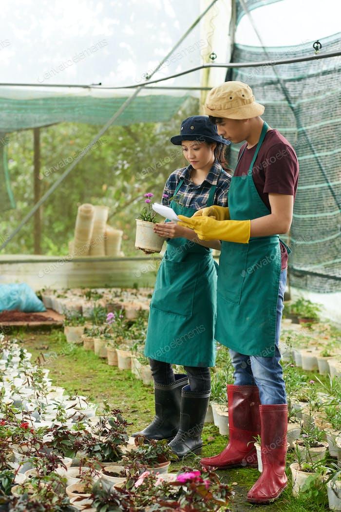 Checking flower pots