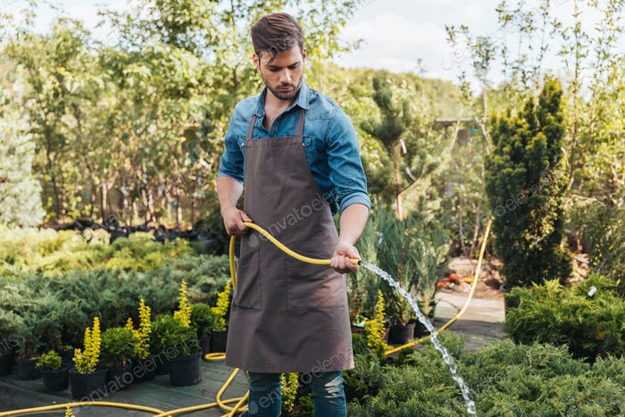 concentrated young gardener in apron watering plants with sprinkler in garden
