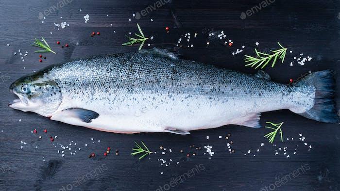 whole fresh raw big salmon fish