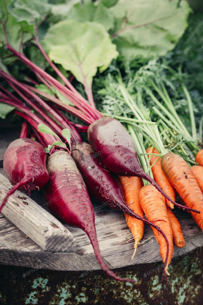 Beets and carrots, farm products