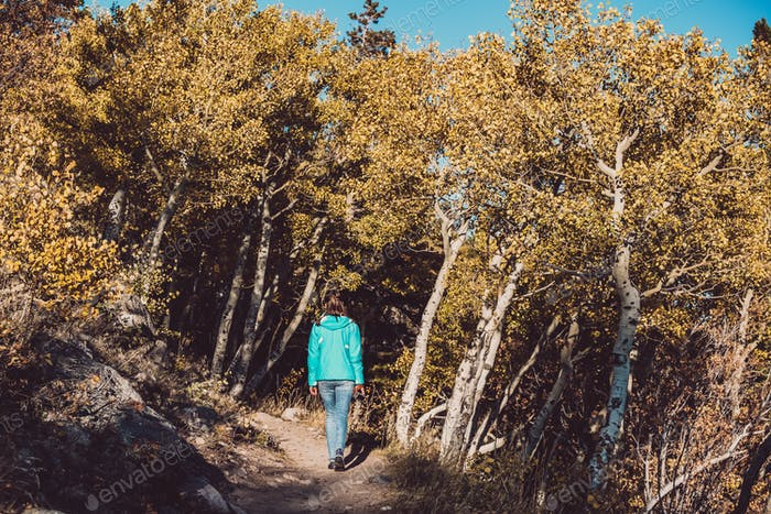 Tourist in aspen grove at autumn