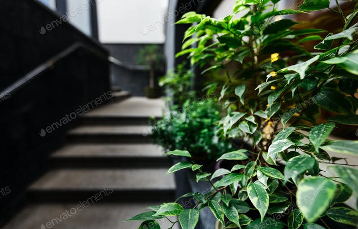 Fresh green plants in pot decorate modern stairs to cafe