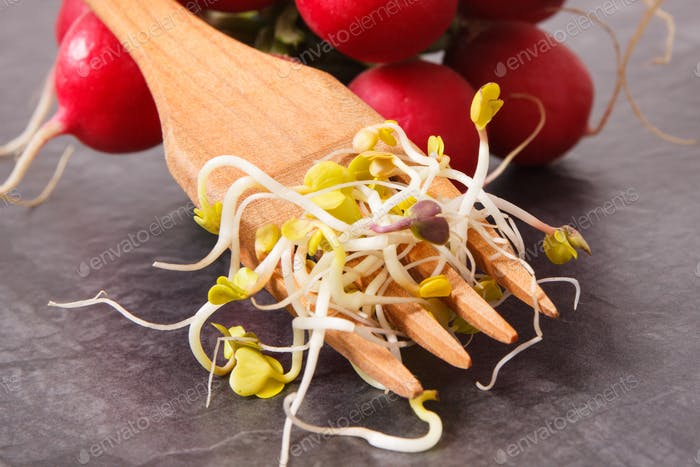 Sprouts of radish with fork, healthy and nutritious eating concept