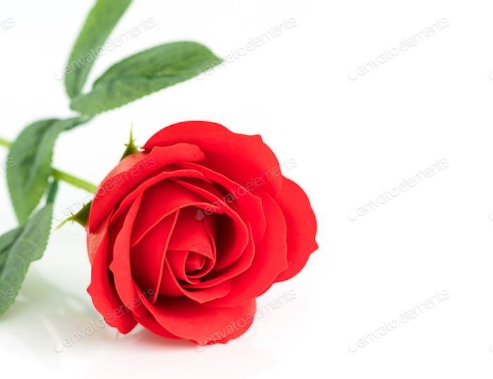 Single Red plastic fake roses on white_-4