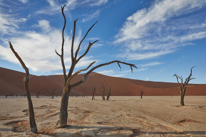 Bare trees standing in front of a sand dune.