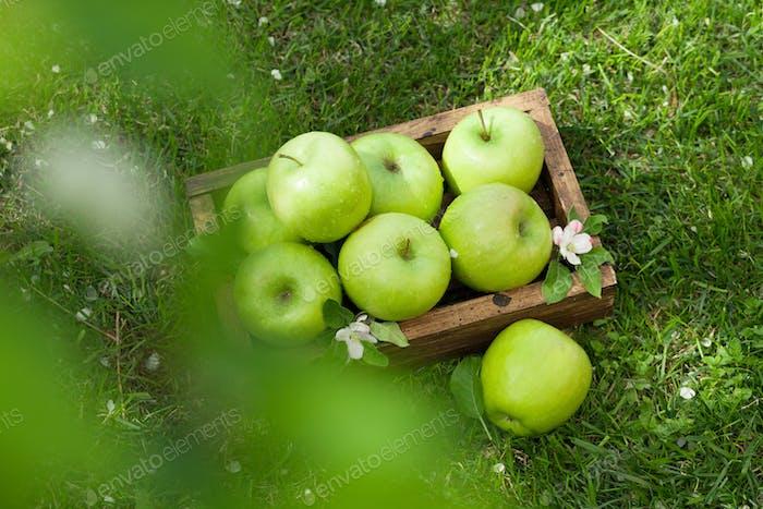 Frische Garten grüne Äpfel in Box