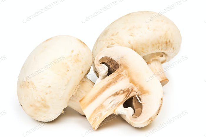 two champignon fungus  on white background