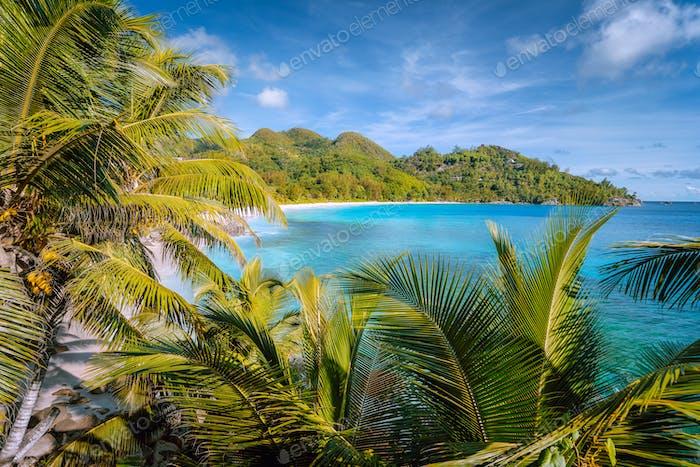 Beautiful tropical exotic Anse Intendance beach on Mahe island, Seychelles. Lush foliage of coconut