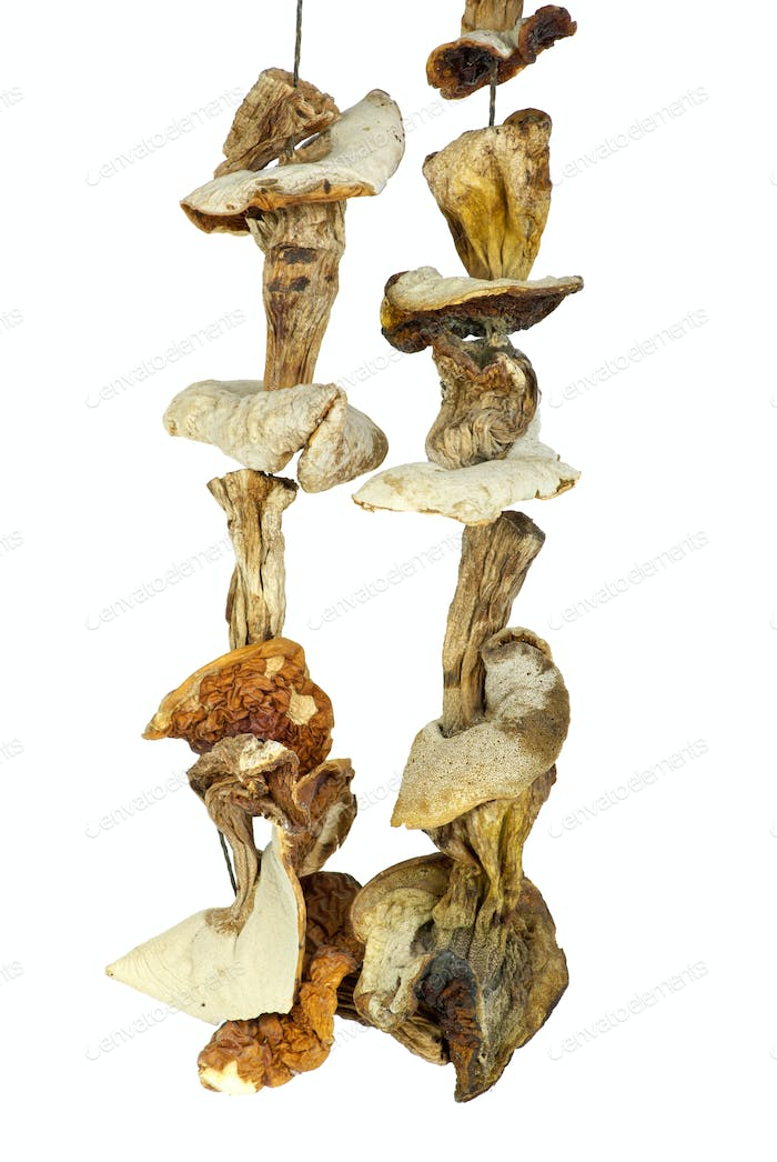 Some dried cepe mushrooms hanging on the rope