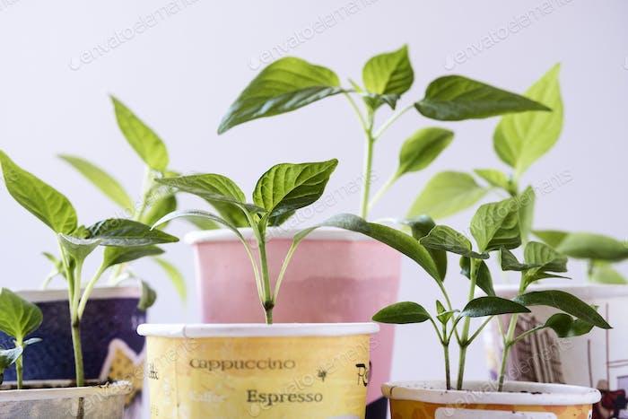 Grupo de vasos desechables de cartón con plantas