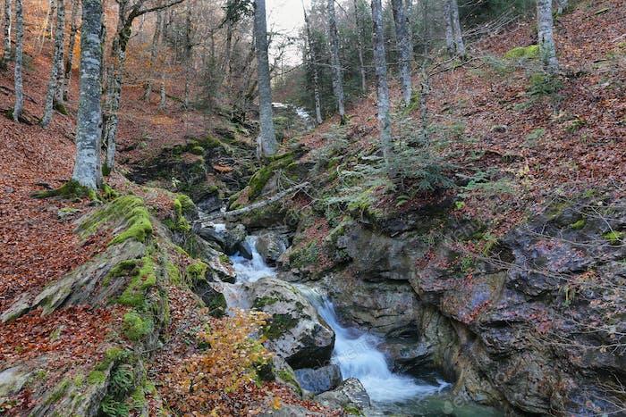 Hermoso bosque en el bosque de Gamueta, Pirineo Aragonés, Huesca, España