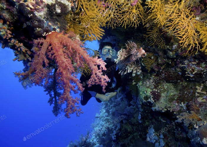 Horizontal overhang on Elphinstone Reef, provides the framing for this picture.  A common lionfish