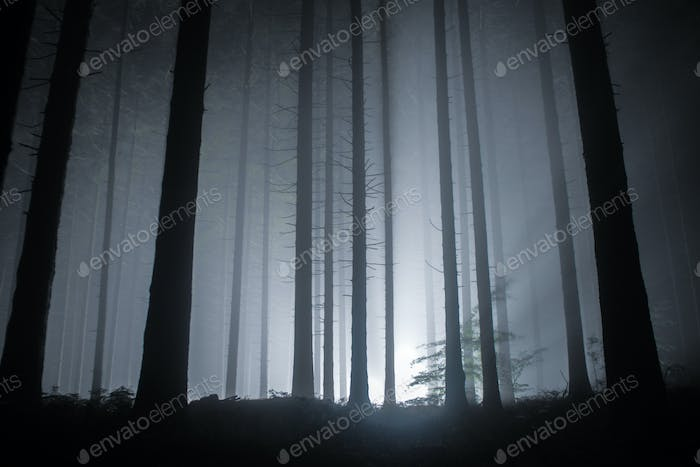 fog in a forest at night with mysterious light in the distance