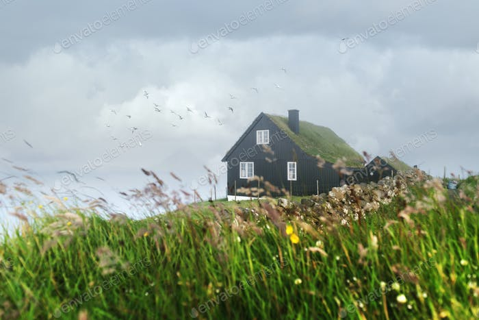 Foggy morning view of a house with typical grass roof