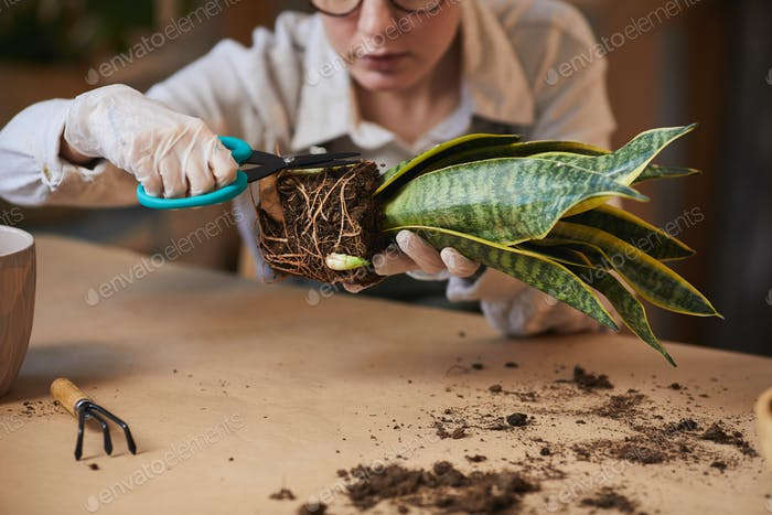 Woman Caring for Houseplants