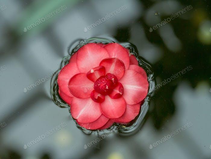 Schöne Blume Hintergrund