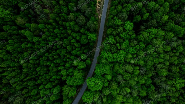 Winding Curvy Road in Forest. Aerial Drone view. Aerial Photography