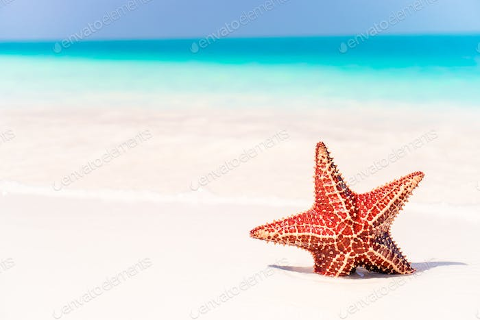 Tropical white sand with red starfish in clear water
