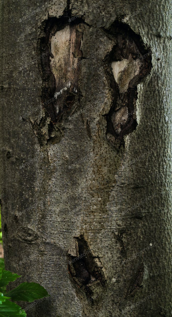 detail of a scary face on a trunk of a tree