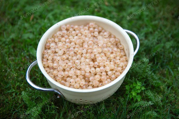 Bowl of white currants on the green grass