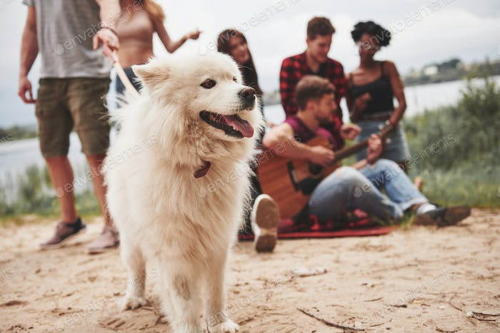 Cheerful cute dog. Group of people have picnic on the beach. Friends have fun at weekend time