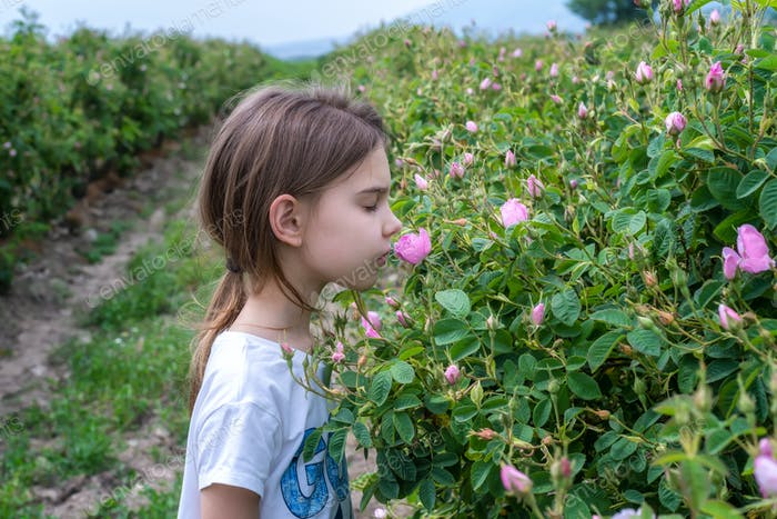 Girl in a rose field