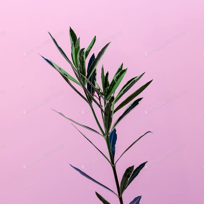 Plant on a pink minimal design fashion