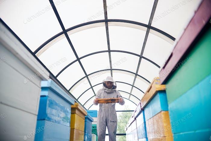 Beekeeper in Modern Apiary